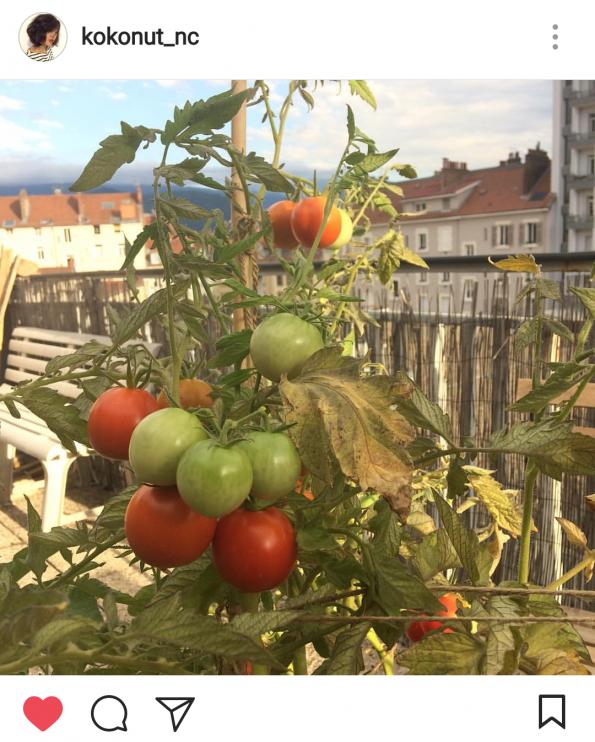 jardin urbain sur le balcon
