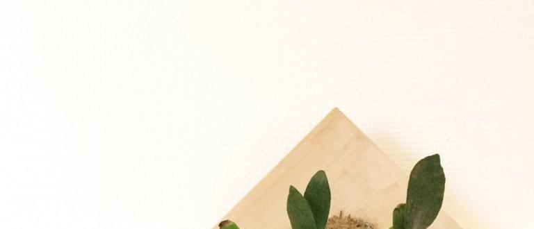 Article : Rencontre avec Jessica Kartotaroeno, jardinière urbaine à Paris