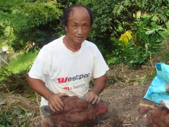 Cultiver une patate douce de 4-5 kilos