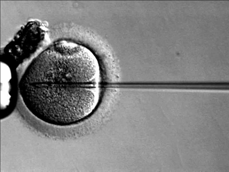 autoconservation ovocytaire, ovocytes